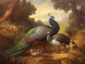 Peacocks by Dmitry Sevryukov