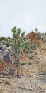 Lone Tree by Vann Hilty
