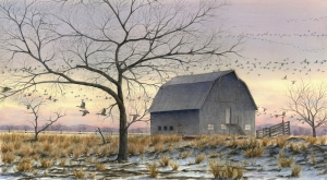 Gray Barn in Spring by Laine Dobson